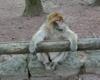 Ausflug in den Affenwald
